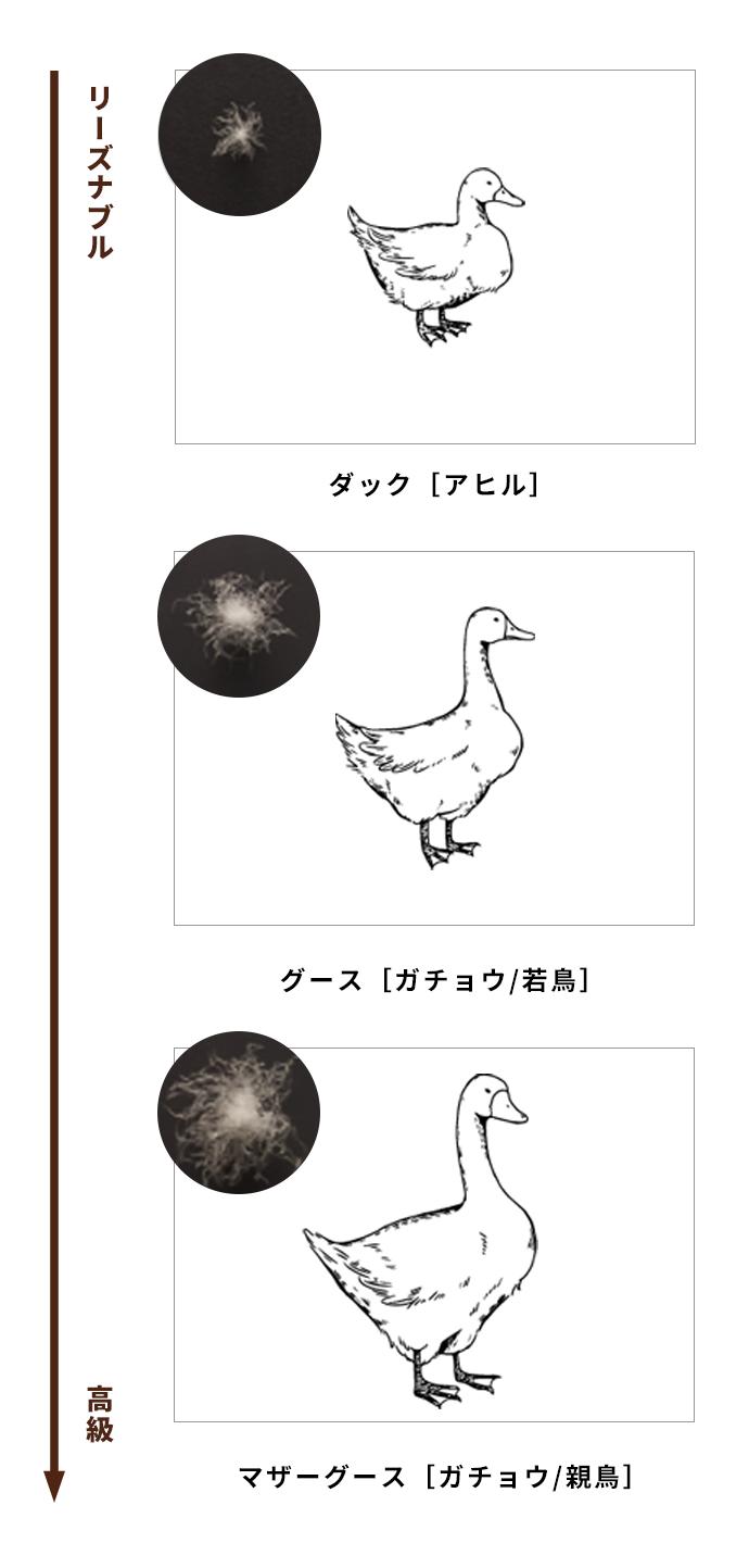 高品質の羽毛(ダウン)の特性